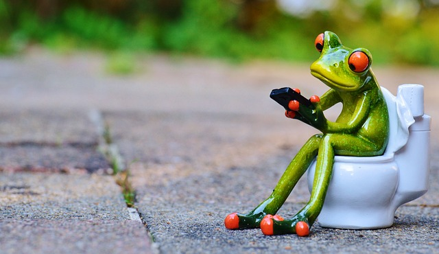 frog-914131_640