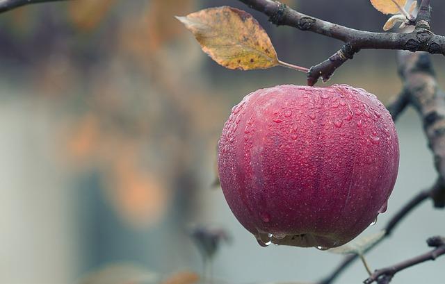 apple-1122537_640