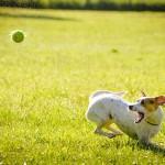 dog-1367297_640