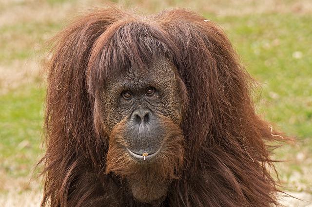 primate-455863_640