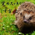 hedgehog-child-1759505_640