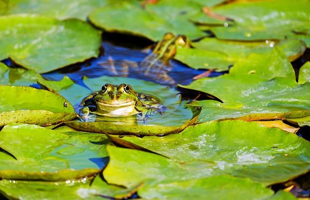 frog-3312038_640