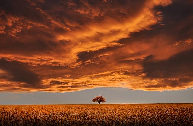 tree-736875_640
