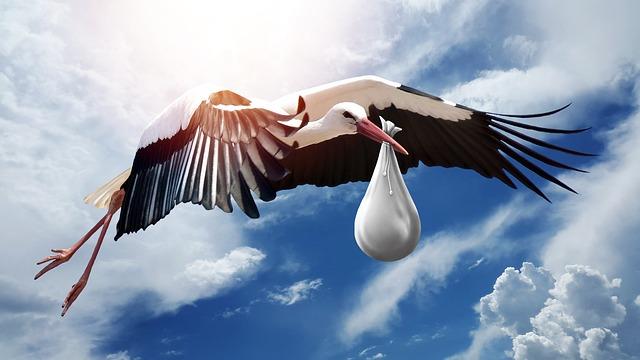 bird-3058712_640