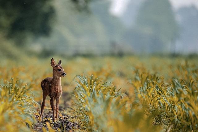 deer-3955031_640