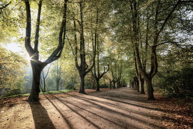 trees-sunrise-3796183_640