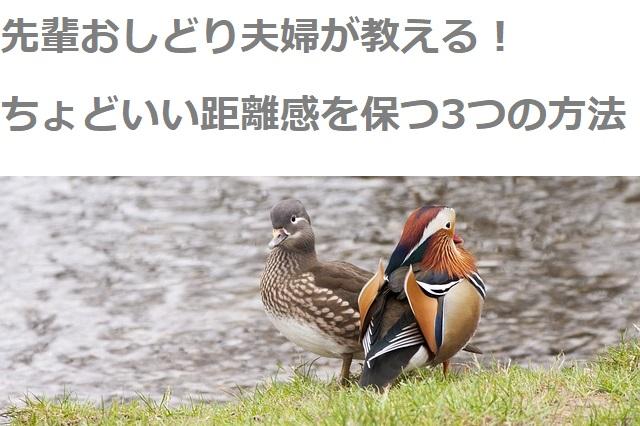 two-ducks-707215_640 (1)