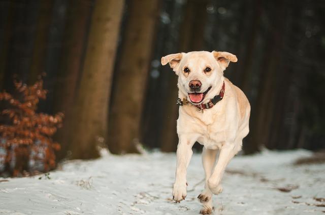 dog-1873218_640
