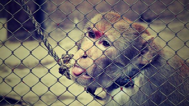 animal-welfare-1119273_640