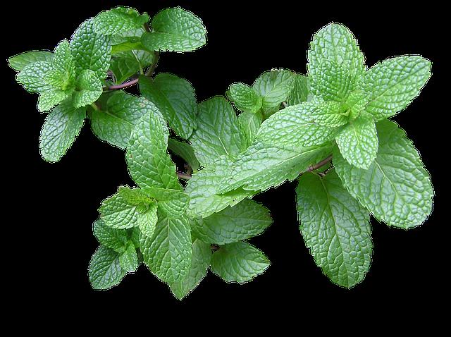 herb-2540568_640
