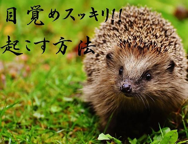 hedgehog-child-1759505_640