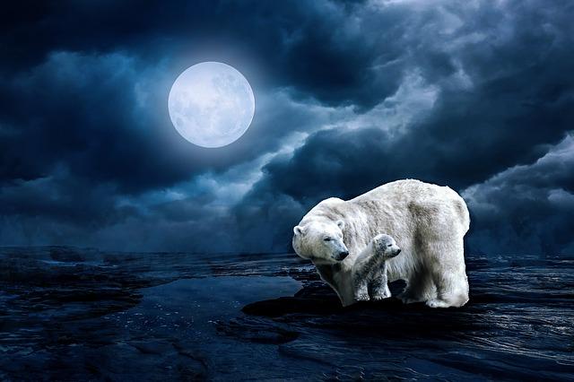 polar-bear-2733791_640