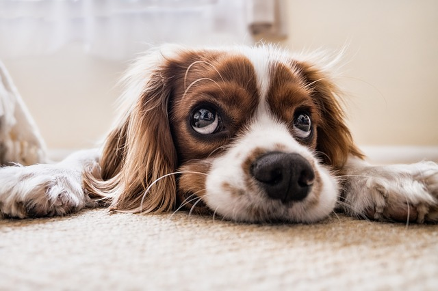 dog-2785074_640