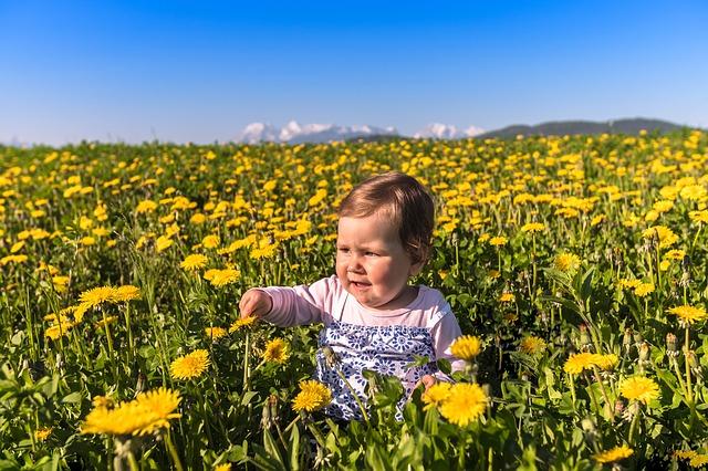 flower-3335847_640