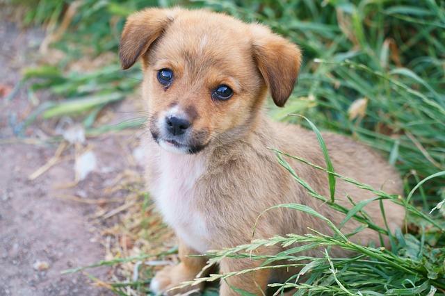 dog-3386457_640