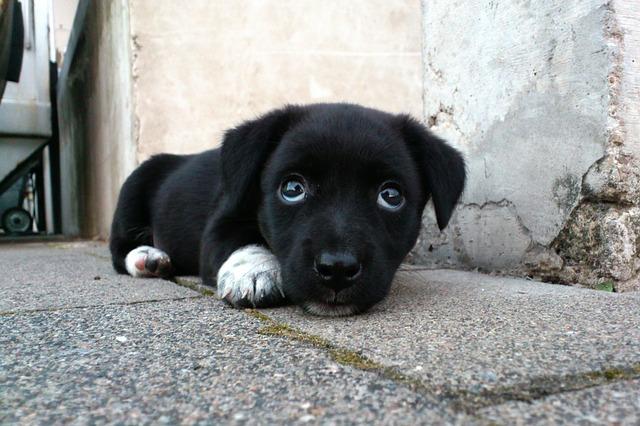 dog-173720_640