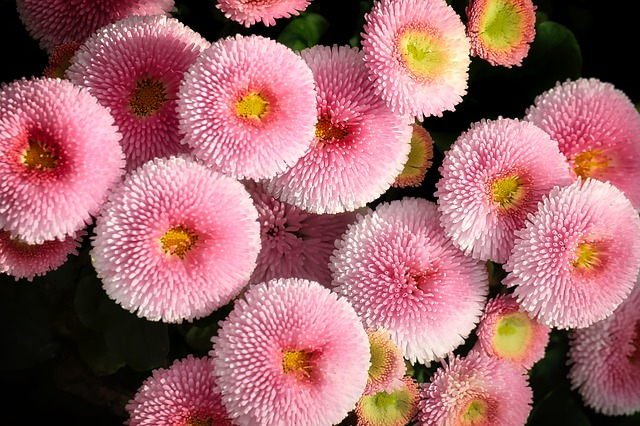 flower-3299512_640