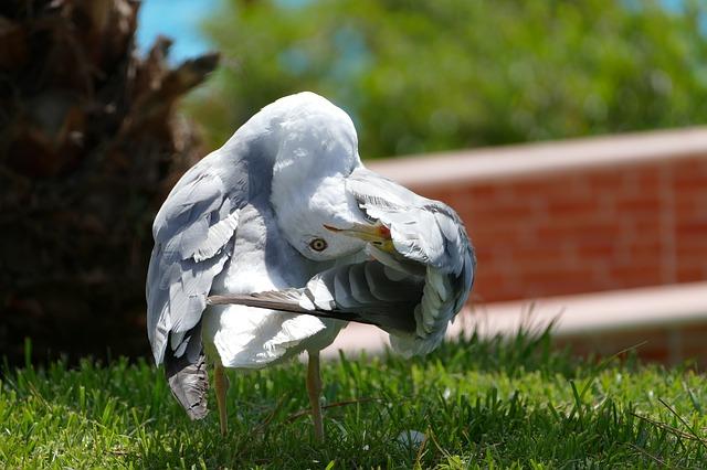 seagull-3450277_640
