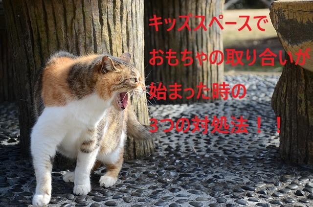 stray-cat-939367_640