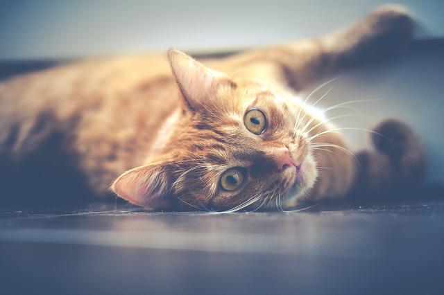 cat-1044914_640