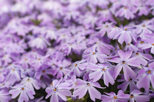 purple-4163951_640