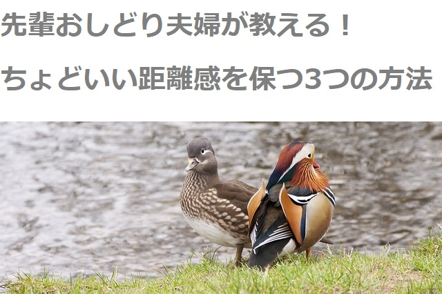 two-ducks-707215_640 (1)
